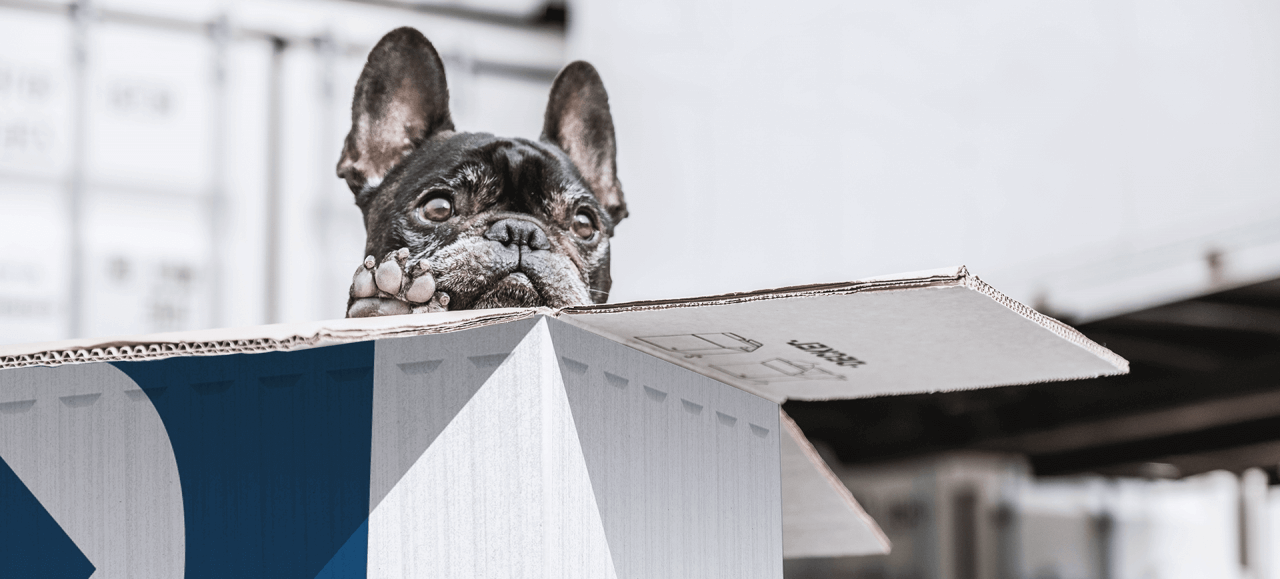 Hund im Umzugskarton während Tiertransport
